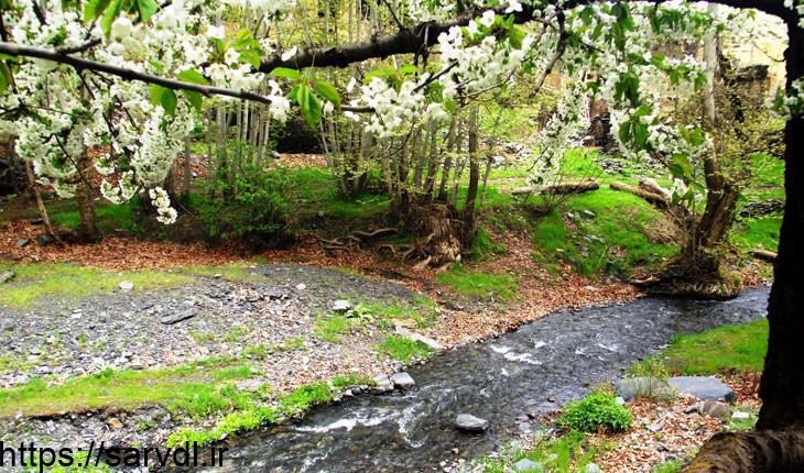 مرموز ترین جنگل ایران