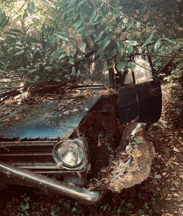 ماشین در جنگل